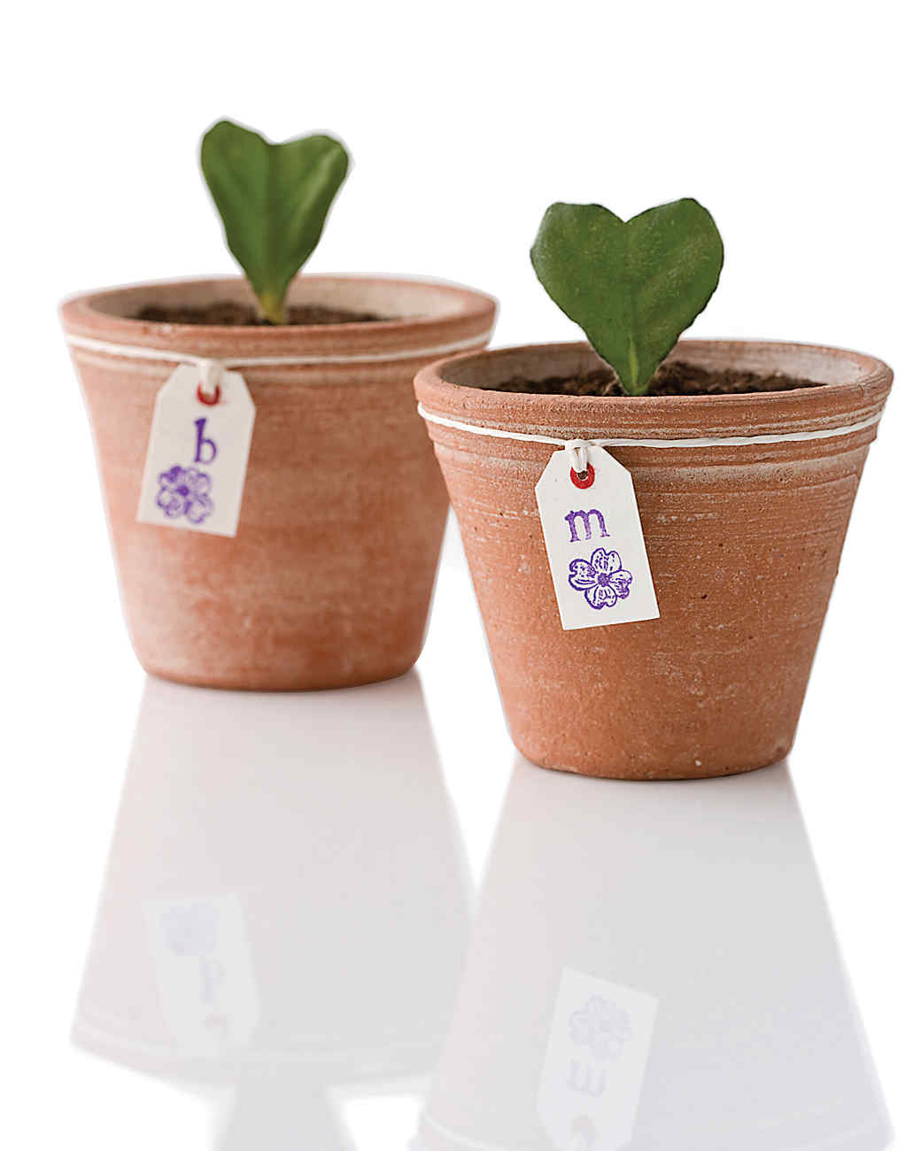 Heart-Shaped African Violets