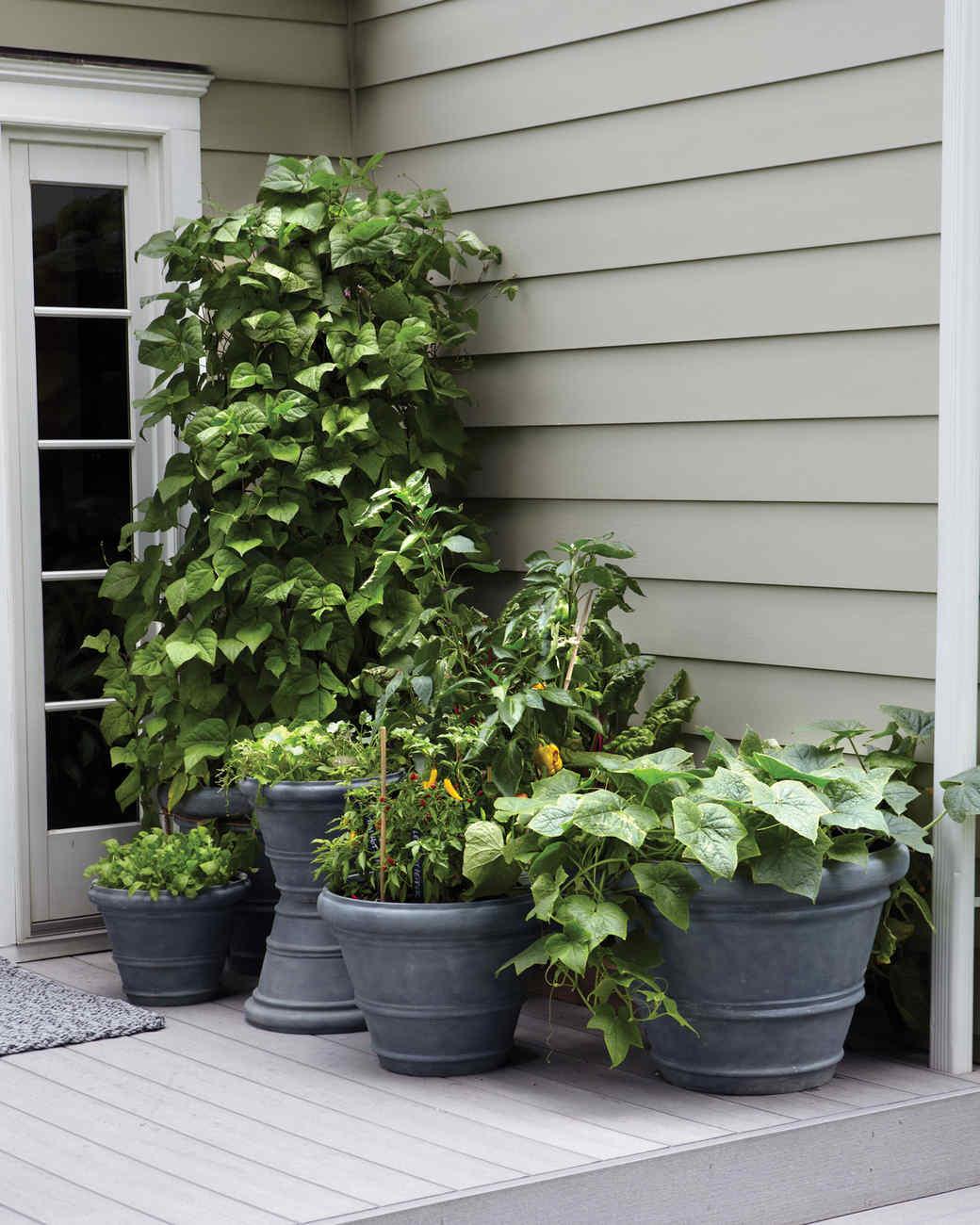 SmallSpace Garden Ideas Martha Stewart