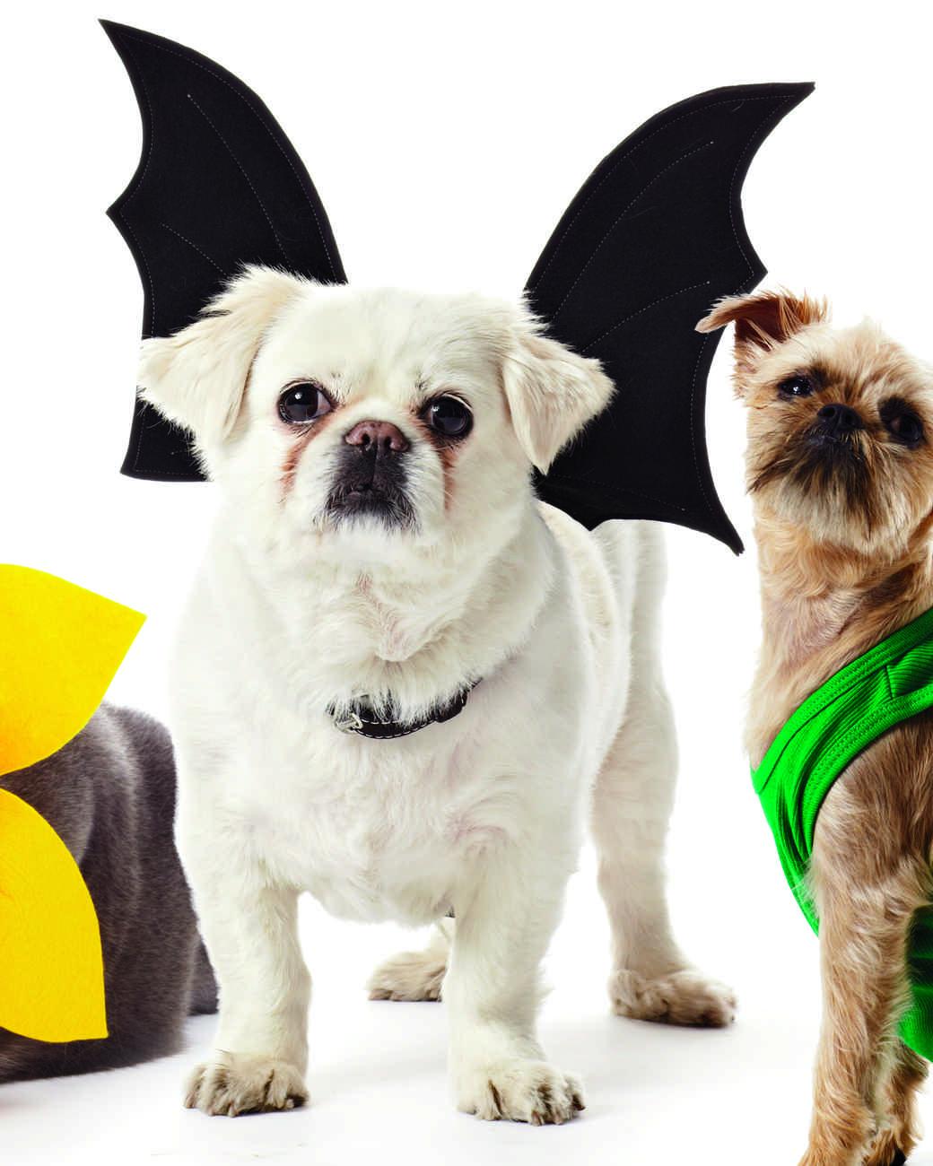 pet costumes 1011mld107618d_vert?itok=DGtEXJYZ pet halloween costumes martha stewart