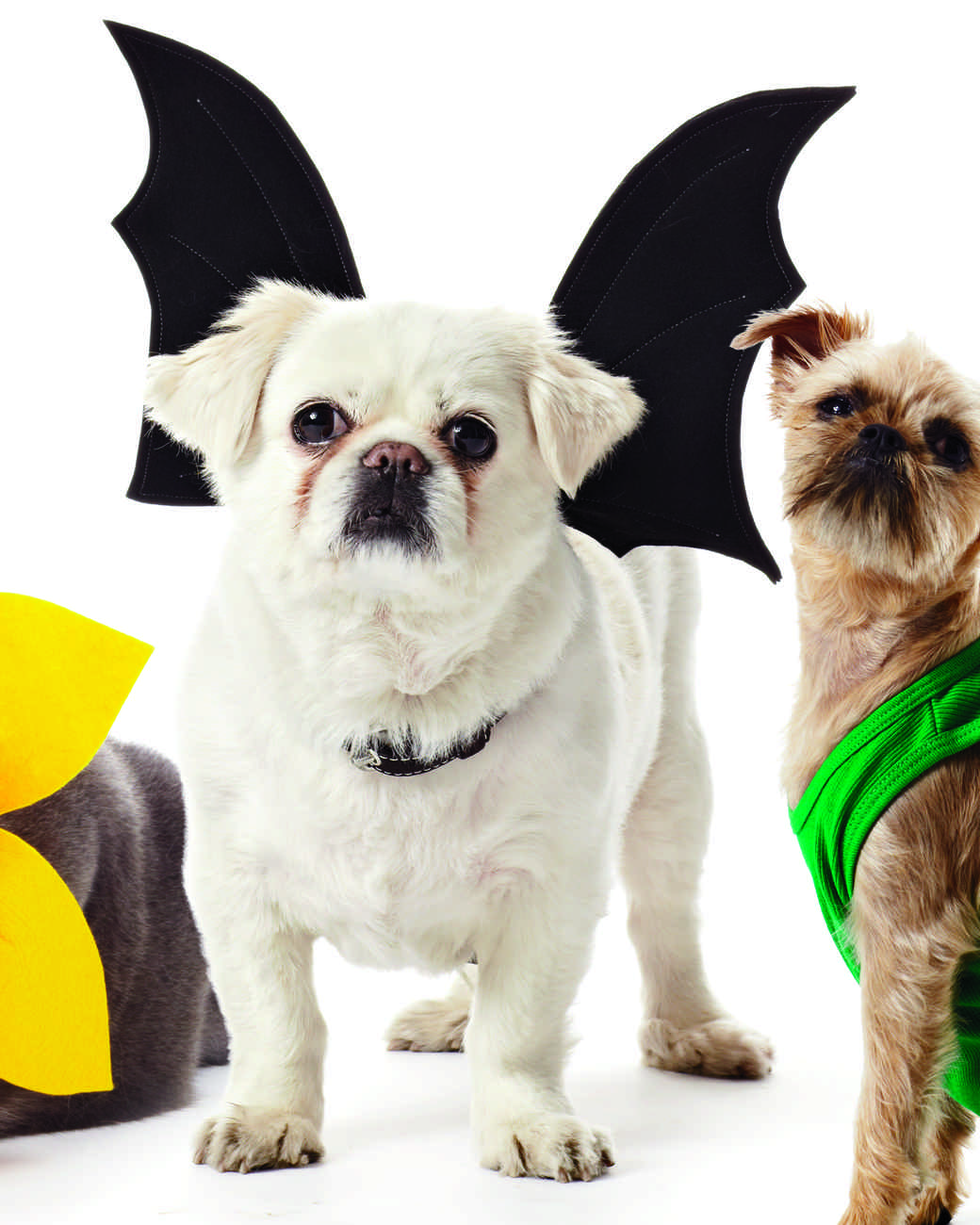 Bat Wings Harness Costume