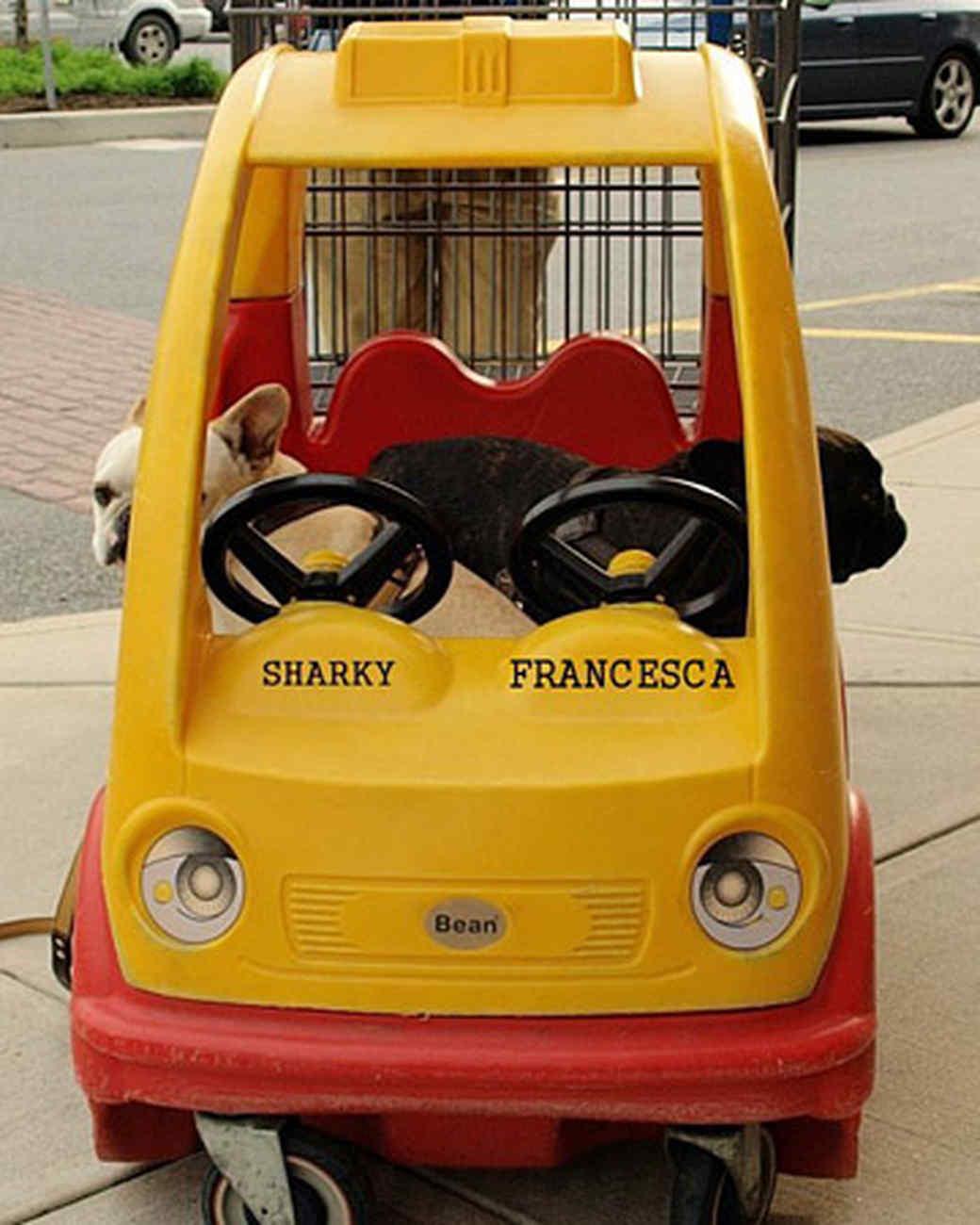 pets_best_wag_shoppingcart1.jpg