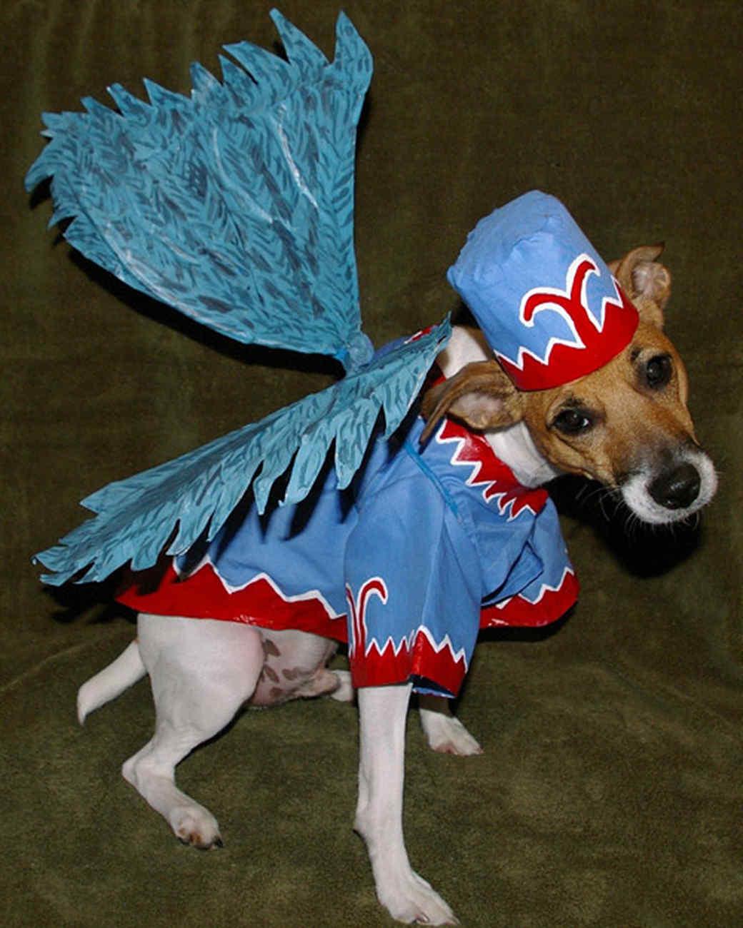 Halloween Pet Contest 2008 | Martha Stewart