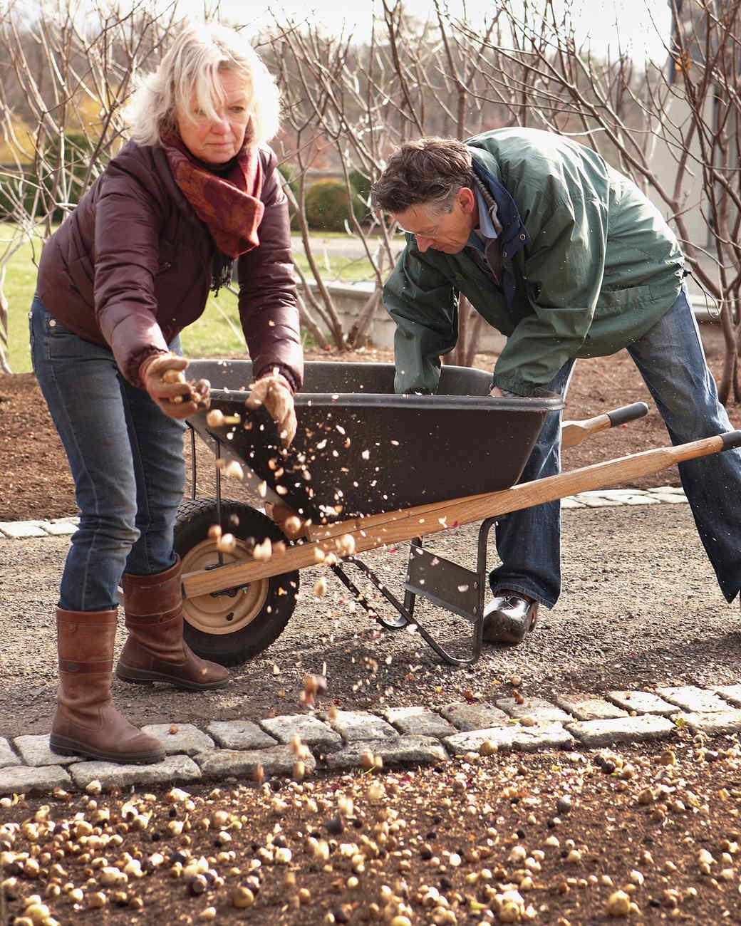sowing-bulbs-0911-mld106916.jpg