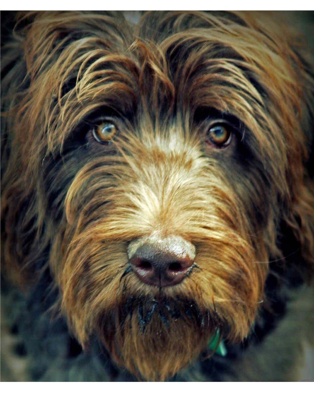 ugc-adoptable-0811-26529021.jpg