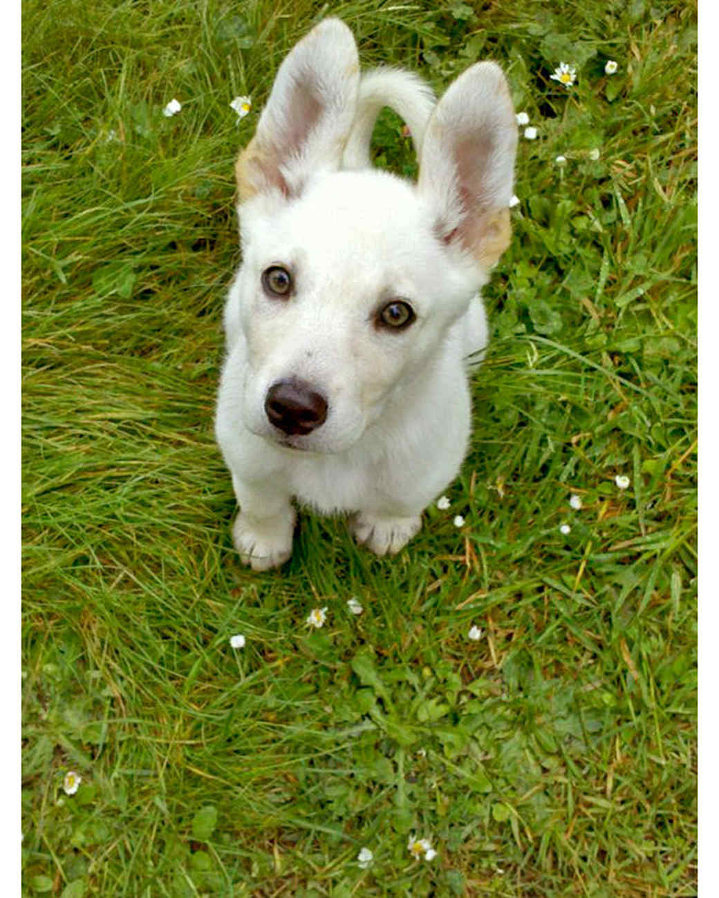 ugc-adoptable-0811-33485089.jpg