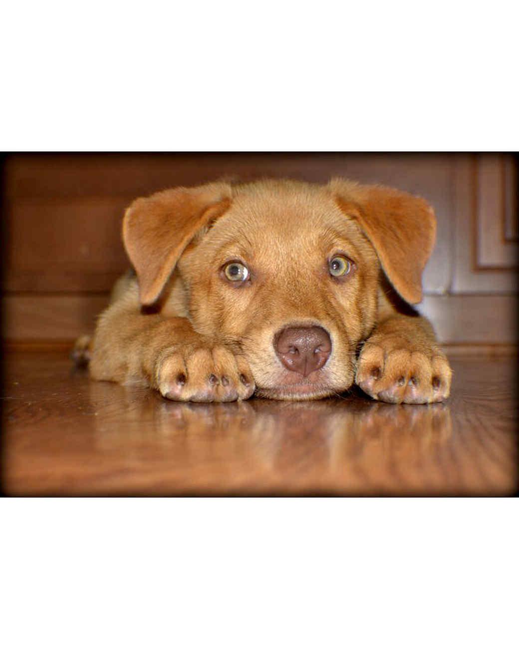 ugc-adoptable-0811-33565736.jpg