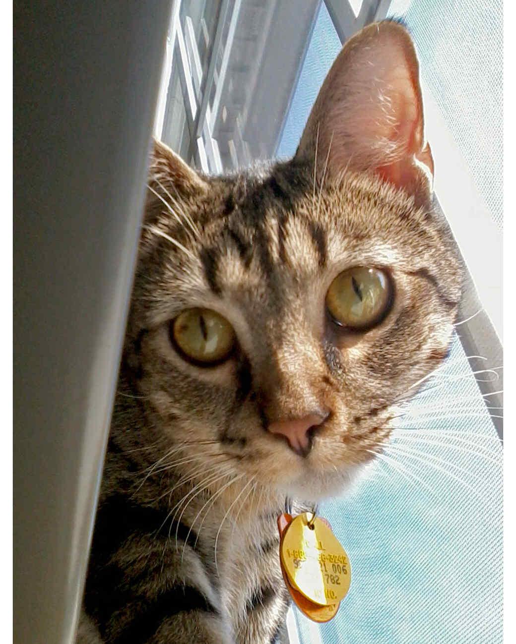 ugc-adoptable-0811-33602594.jpg