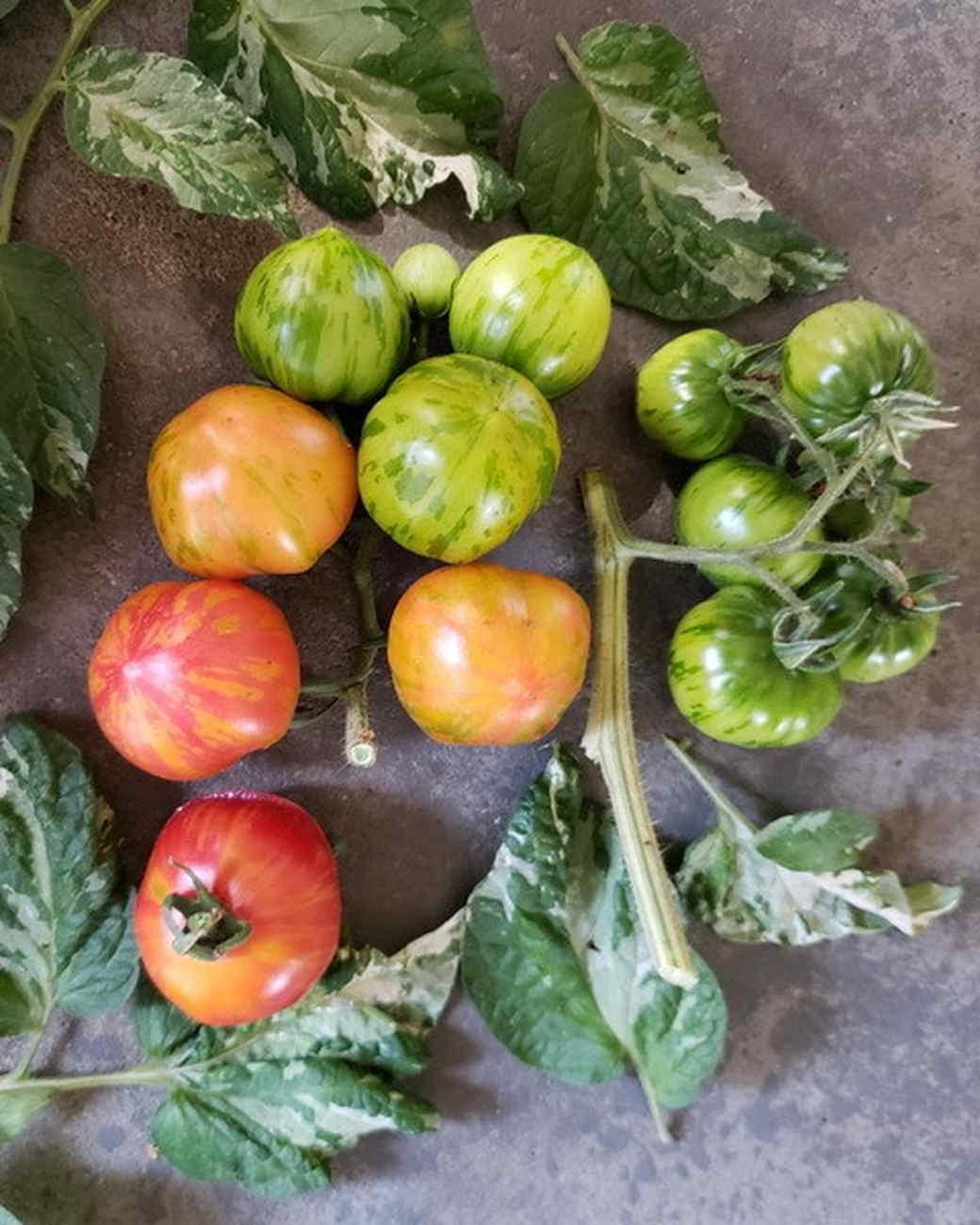 wild boar farms tomatoes