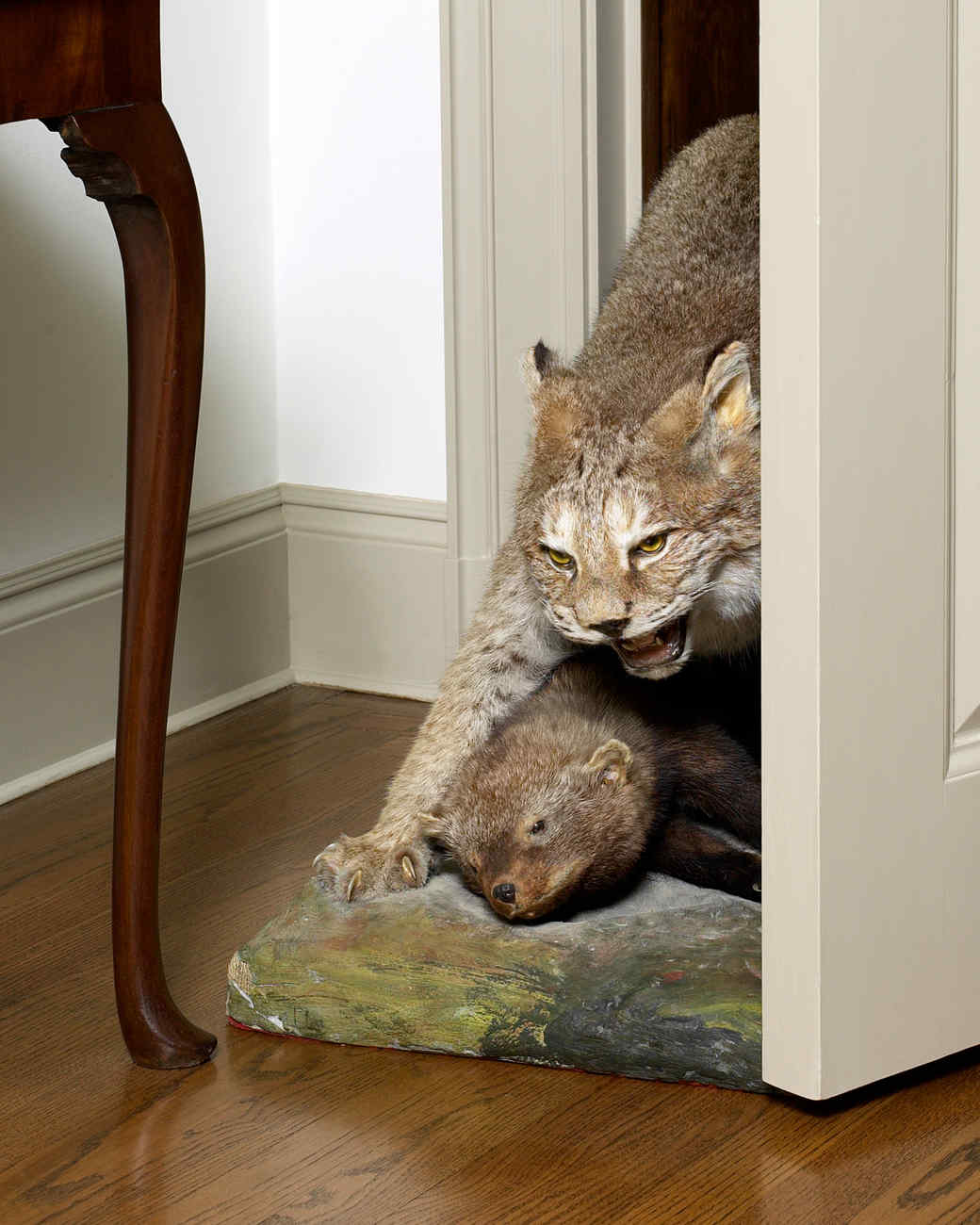 lynx-taxidermy-1011mld106418.jpg
