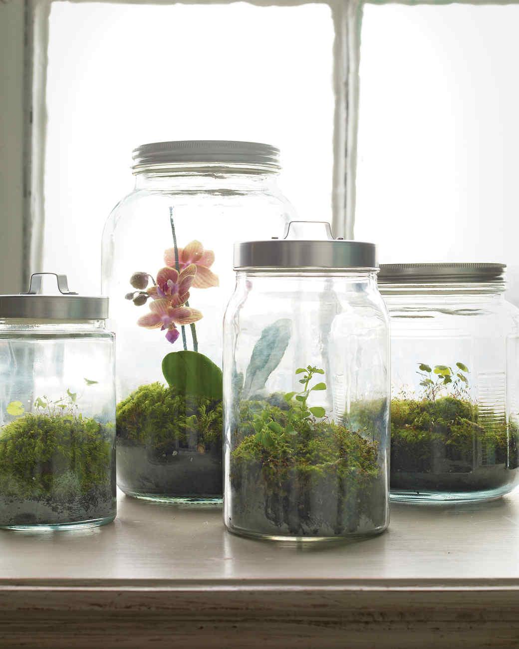 Its Alive How To Make A Terrarium Martha Stewart - Amazing diy non living terrarium