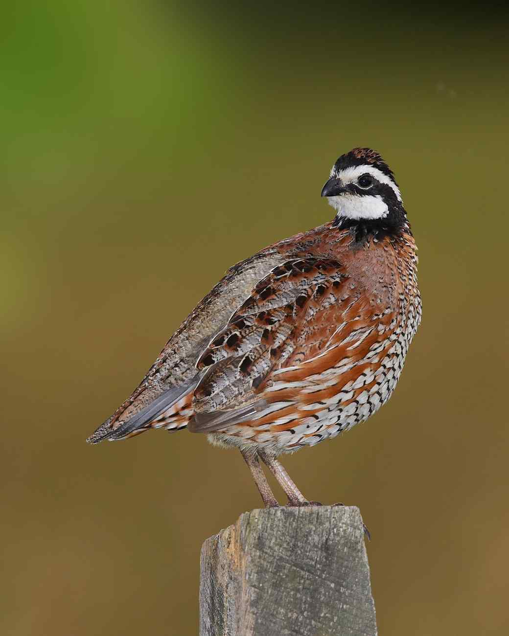 The Most Common Birds You'll See in Your Backyard—and One of the Rarest!