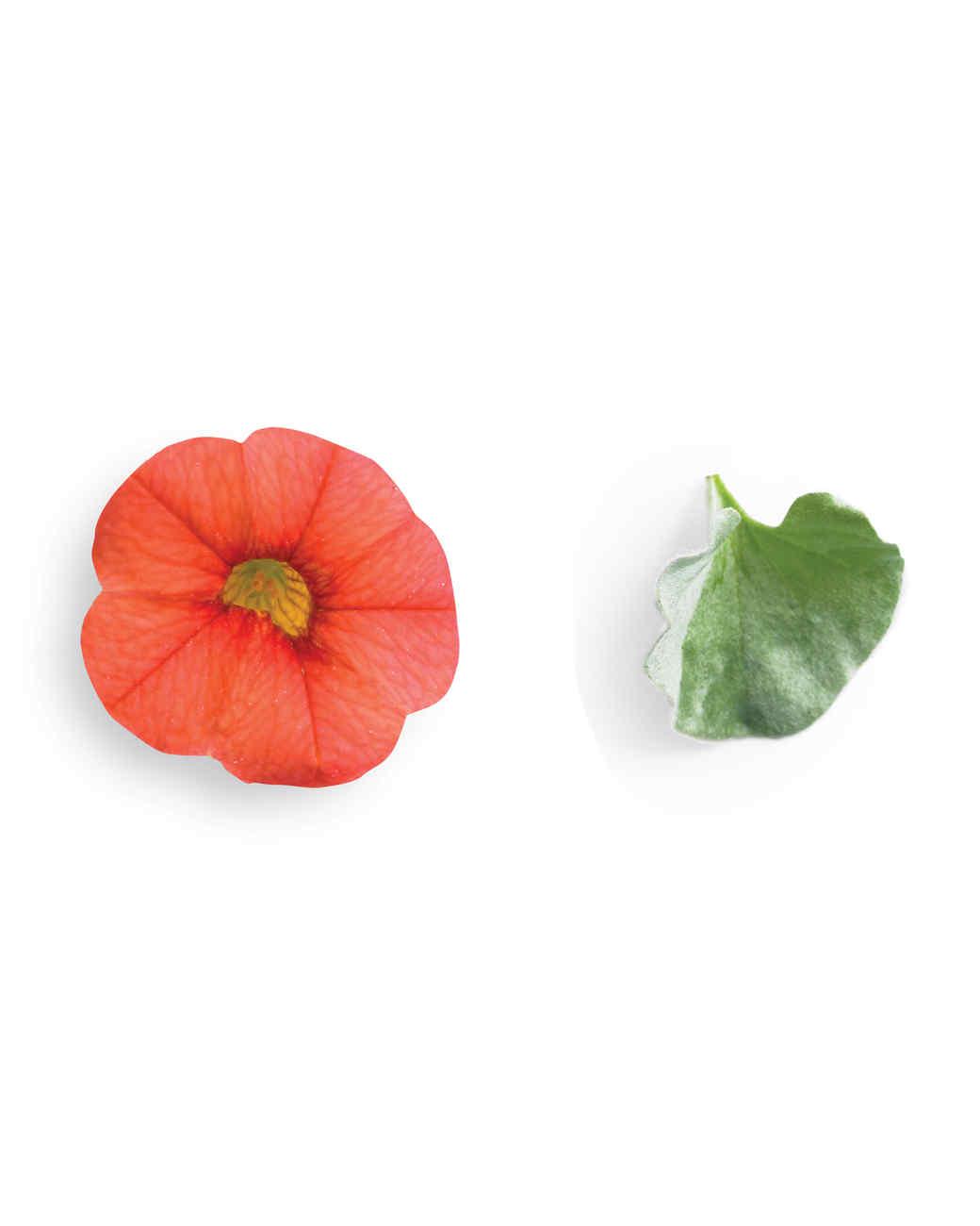 petal2-nursery-0511mld106158.jpg