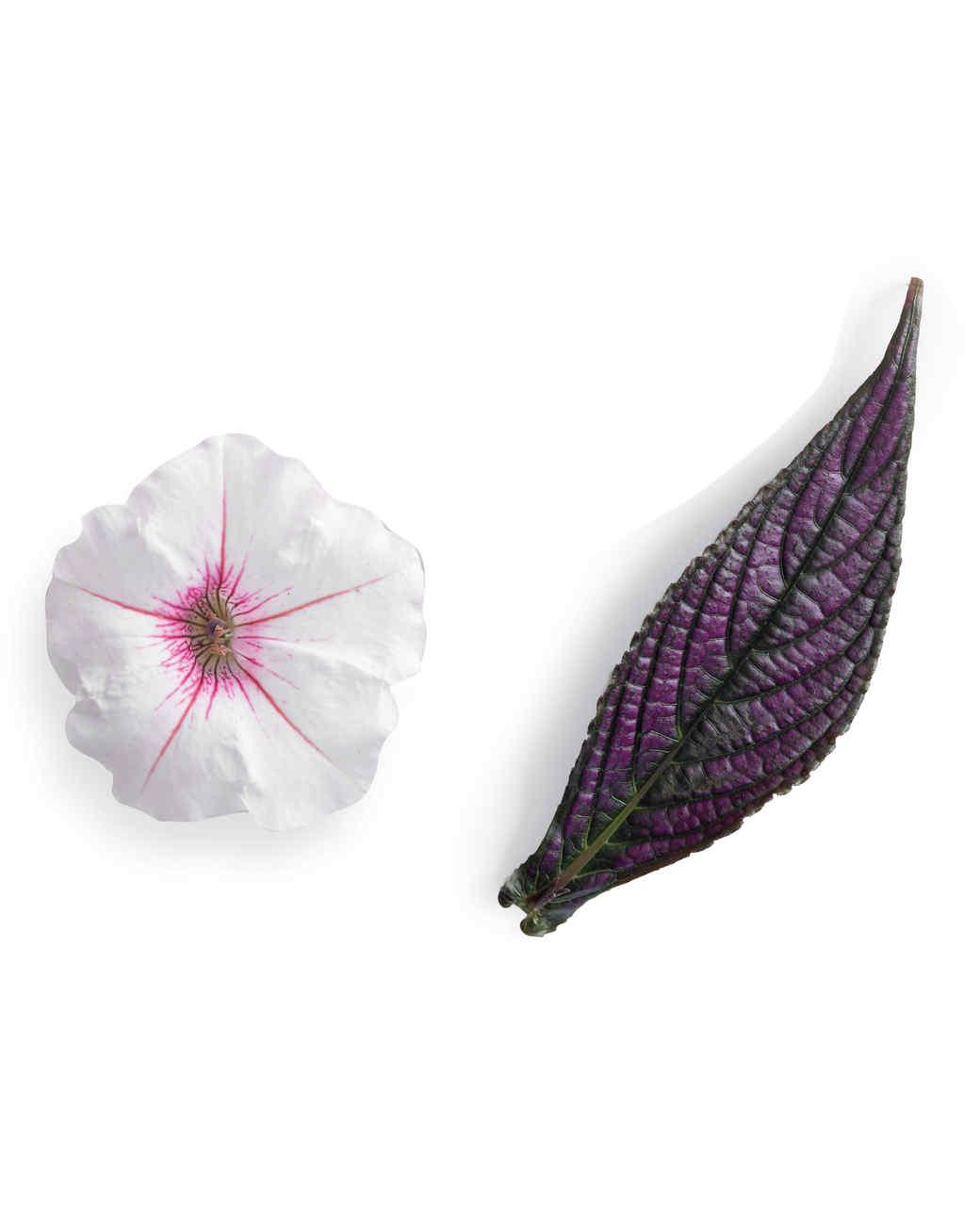 petal3-nursery-0511mld106158.jpg