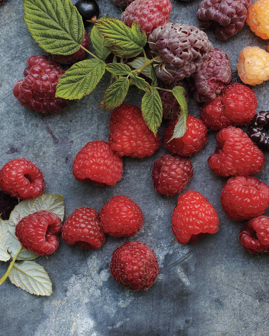 reveille-raspberry-mld107637.jpg