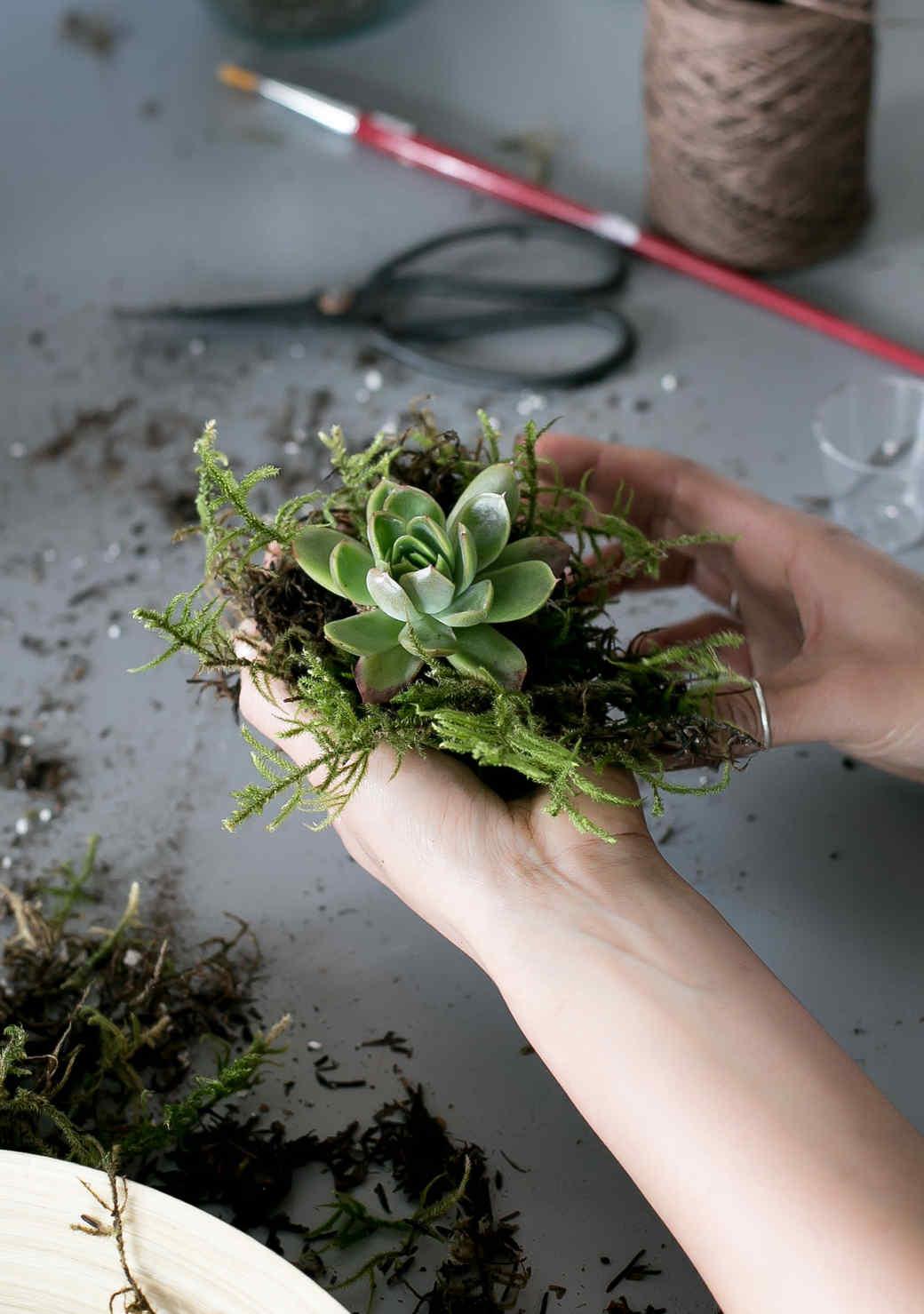 tvfs-succulent-kokedama-0428.JPG (skyword:266544)