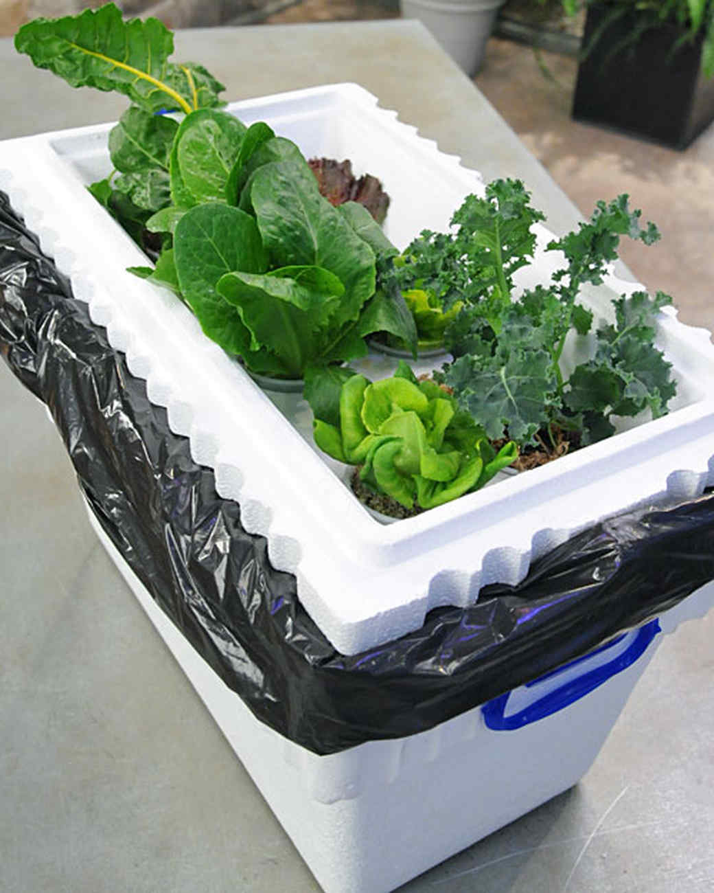hd hydroponic martha a stewart build to garden how