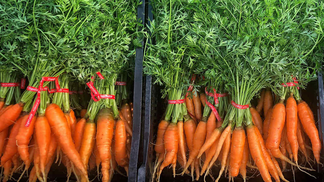 bunches of carrots in black boxes