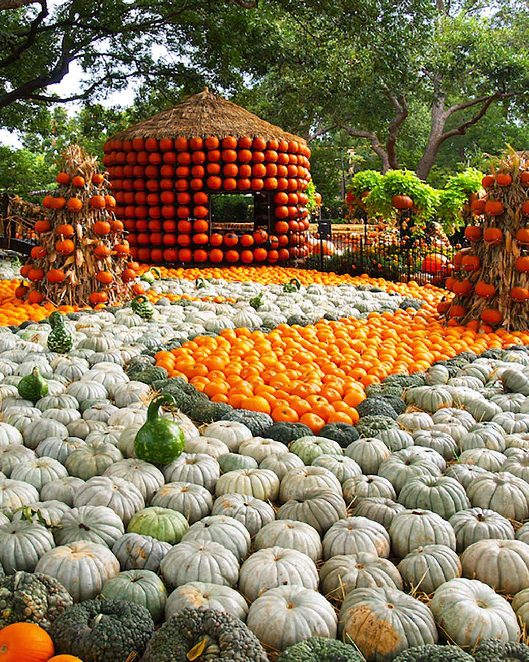 pumpkin gourd exhibition