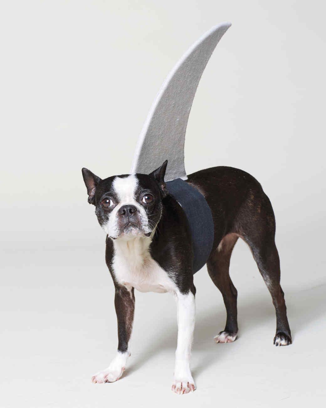 & Think Fin: Dog Shark Halloween Costume u0026 Video | Martha Stewart
