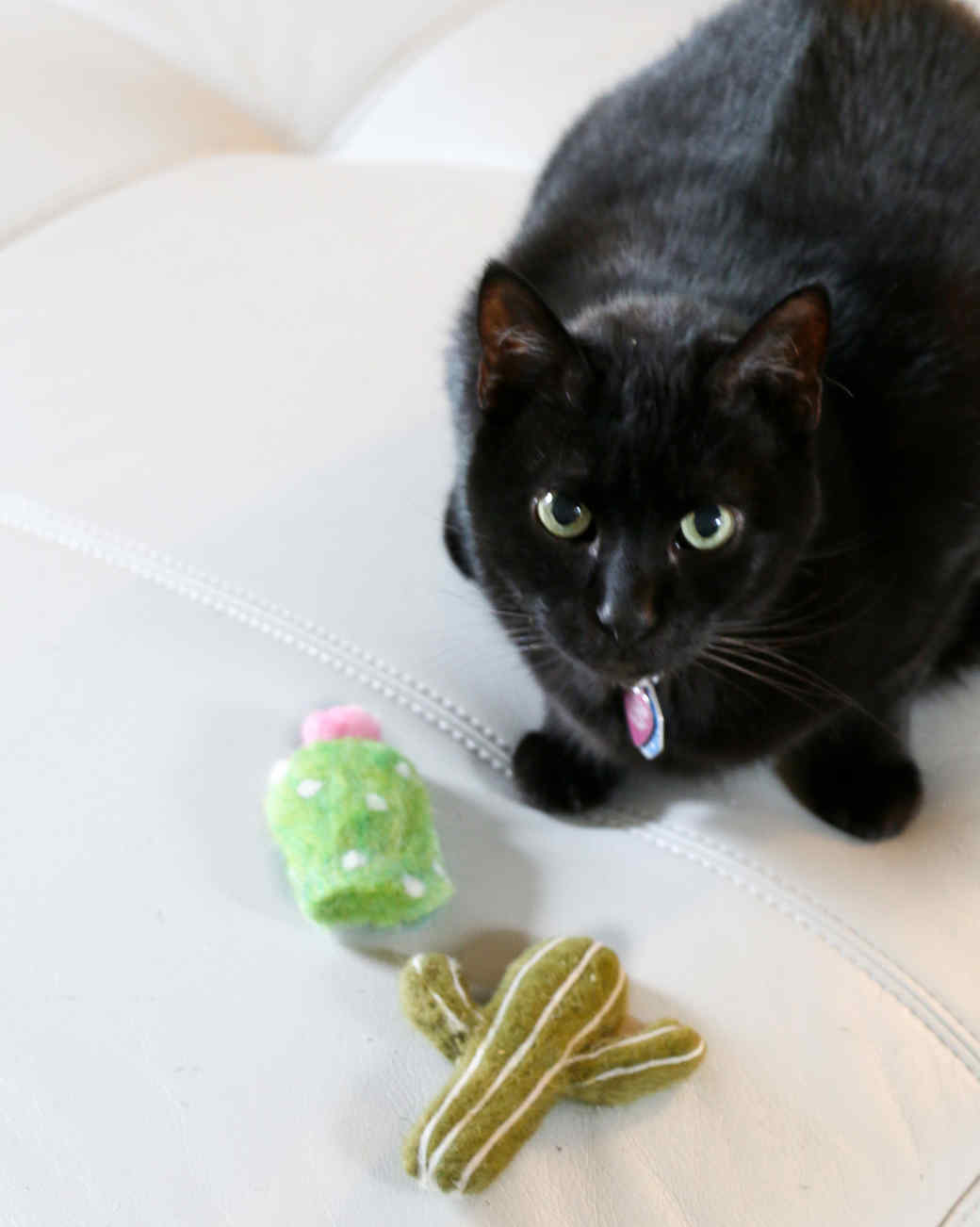 black cat with two felt cactus toys