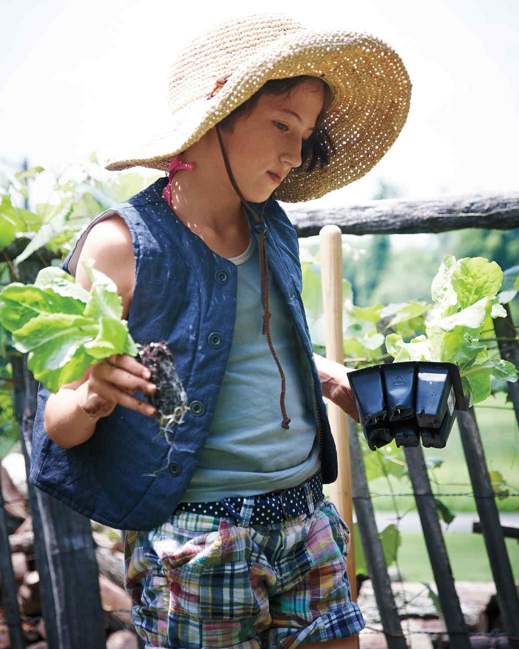 garden-party-lettuce-md107635.jpg