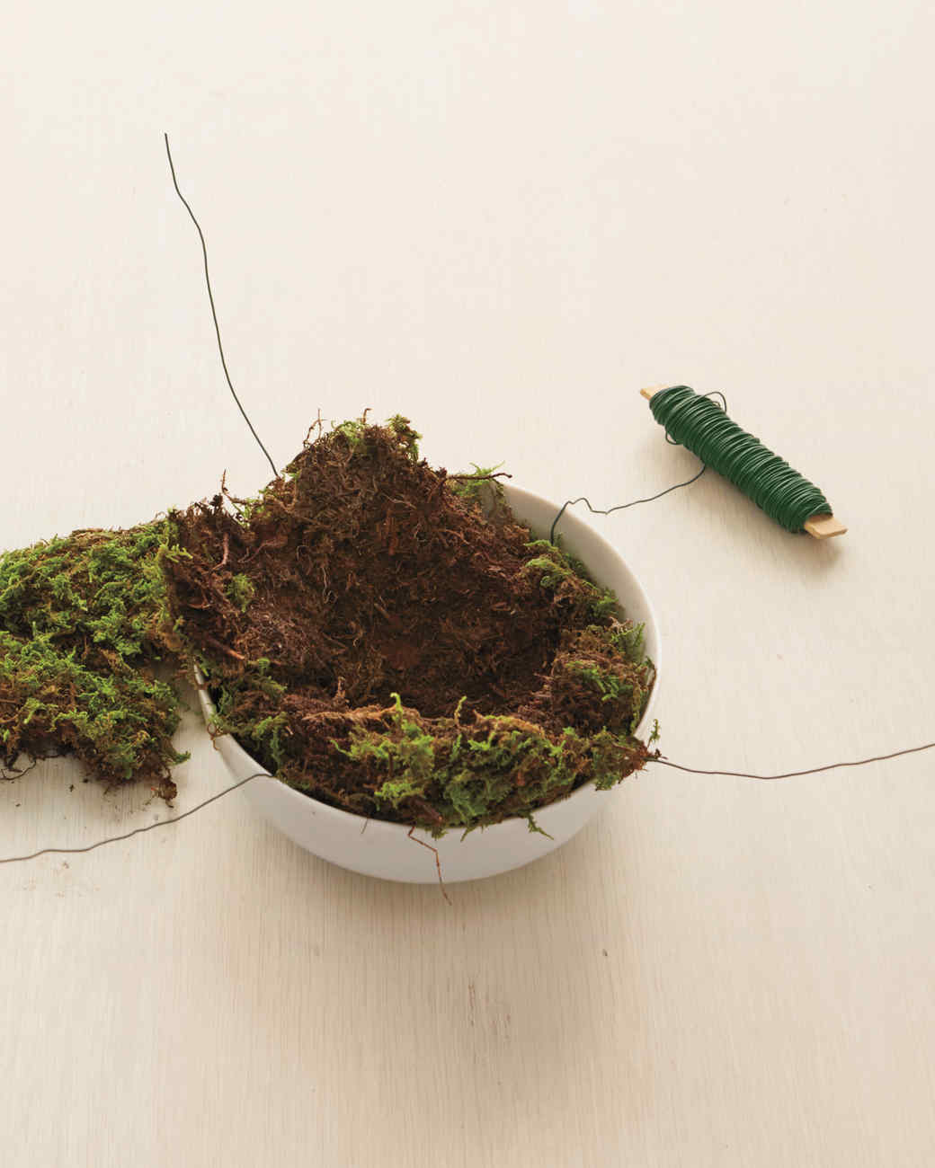 moss-plant-how-to-164-d112632.jpg