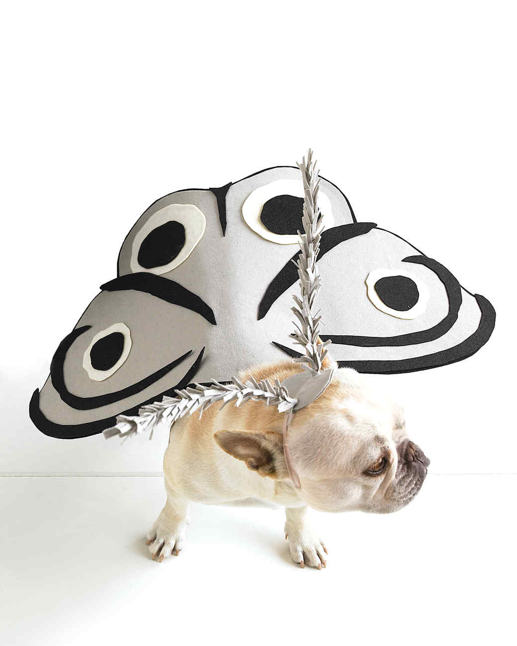 Moth-Dog Pet Costume