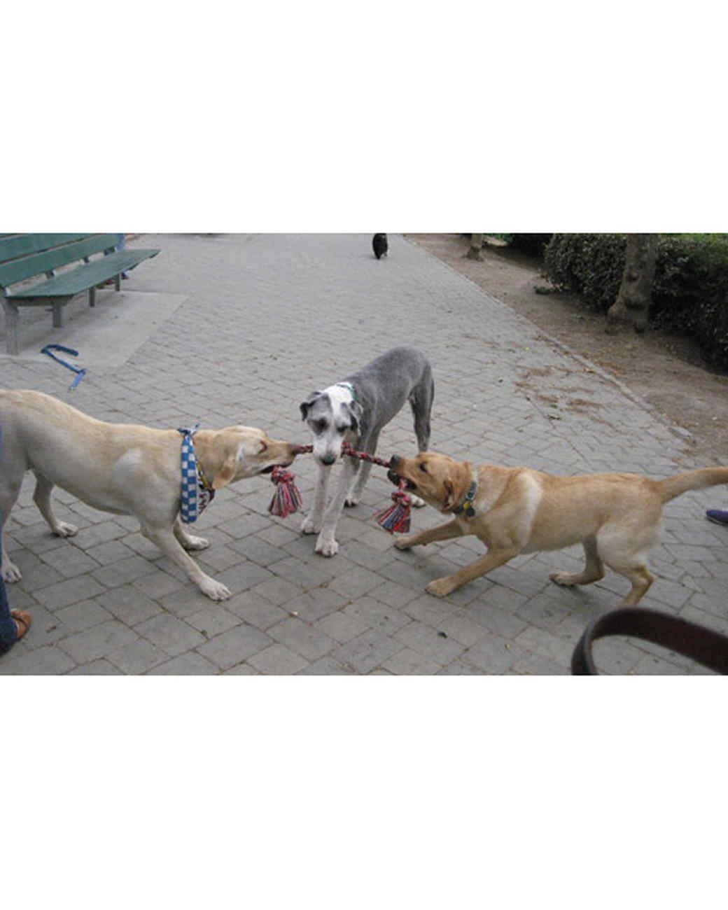 pets_at_play_6304643_11424139.jpg