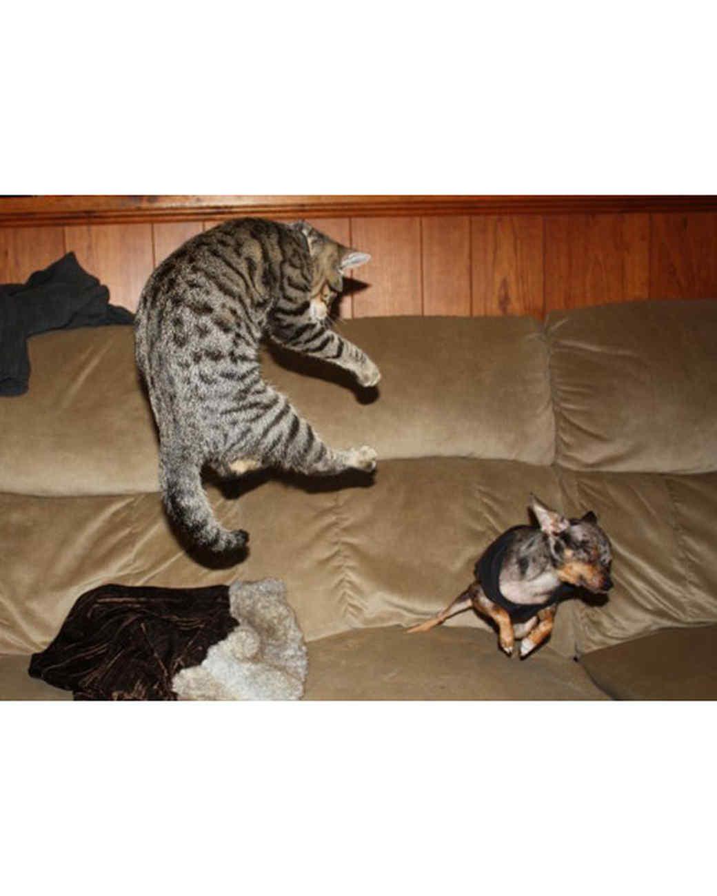 pets_at_play_6352998_11947159.jpg