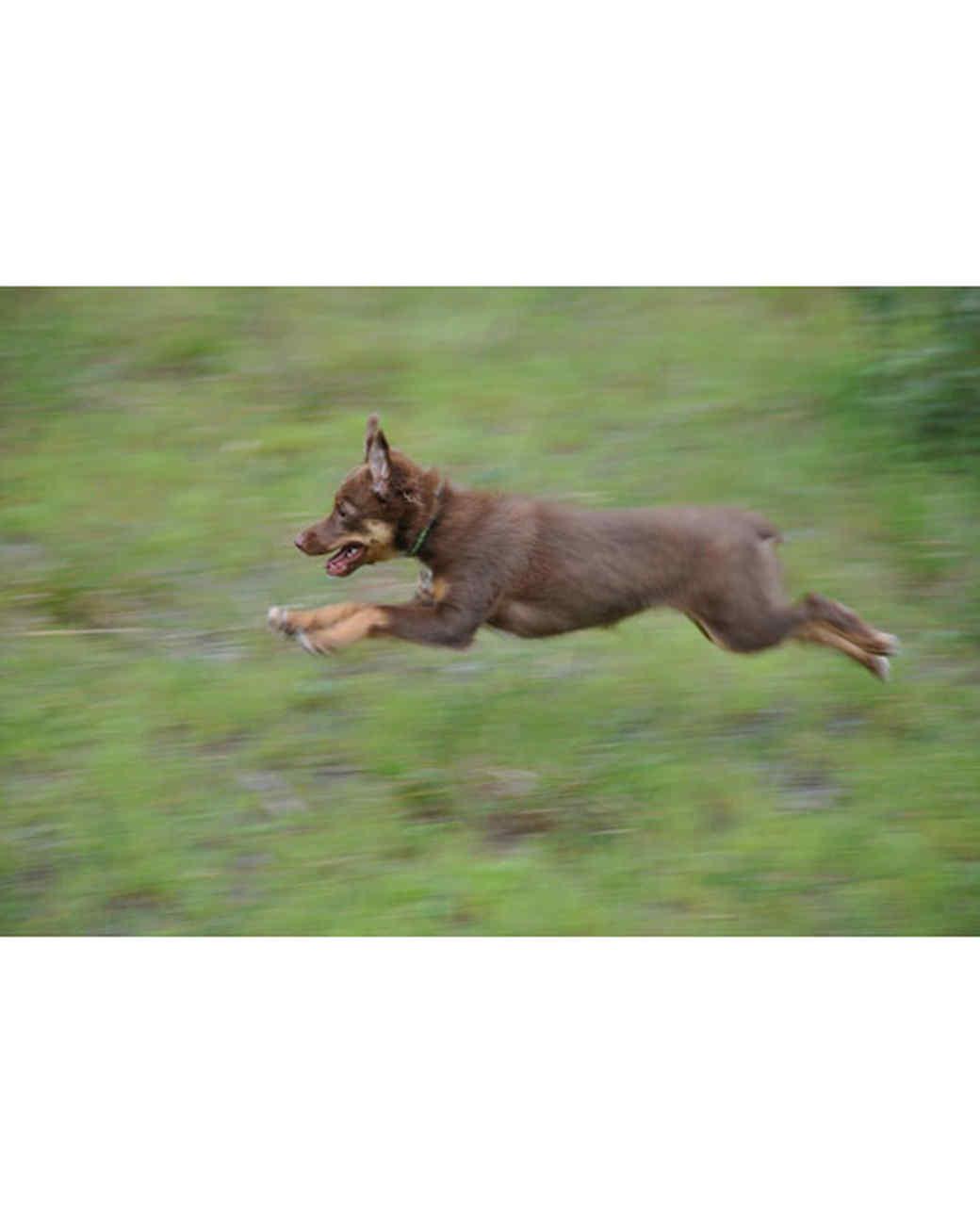 pets_at_play_6660760_16591338.jpg