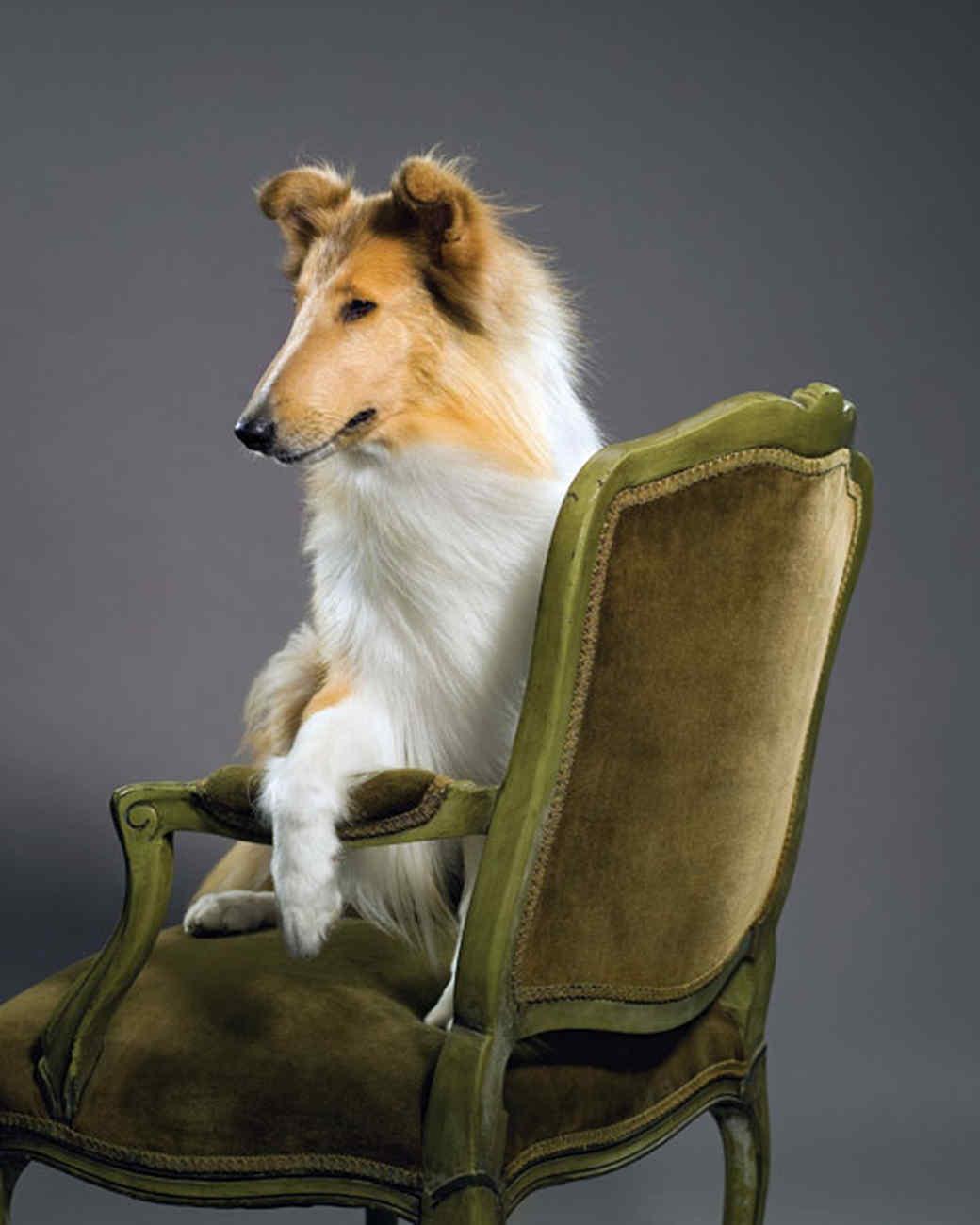 Beau ... Bailey Fine Pet Furniture With ...