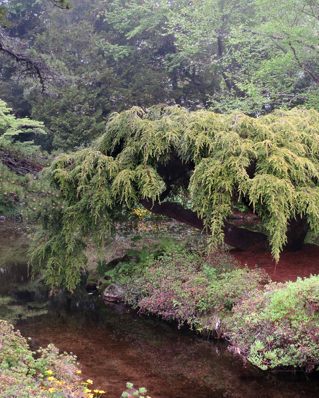 asticou-azalea-gardens-31-0615.jpg