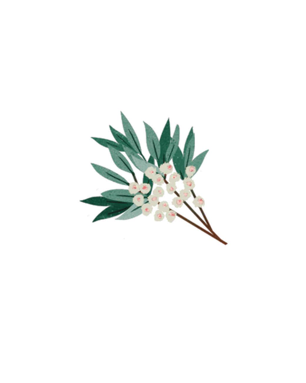 essential-oils-illustration-04.jpg