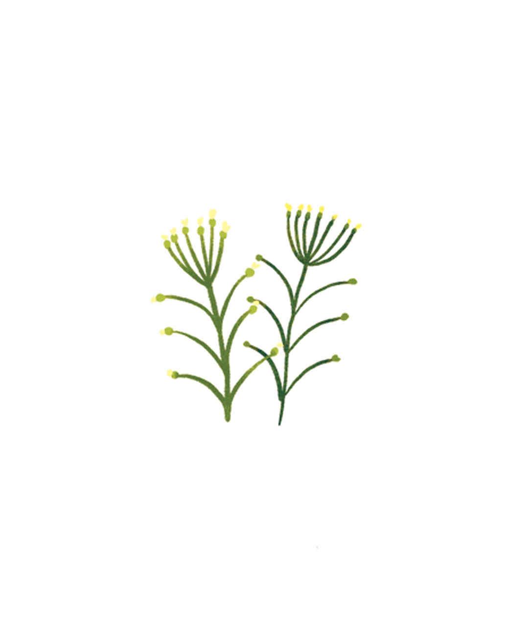 essential-oils-illustration-10.jpg