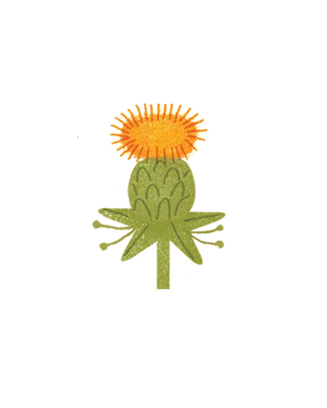 essential-oils-illustration-16.jpg