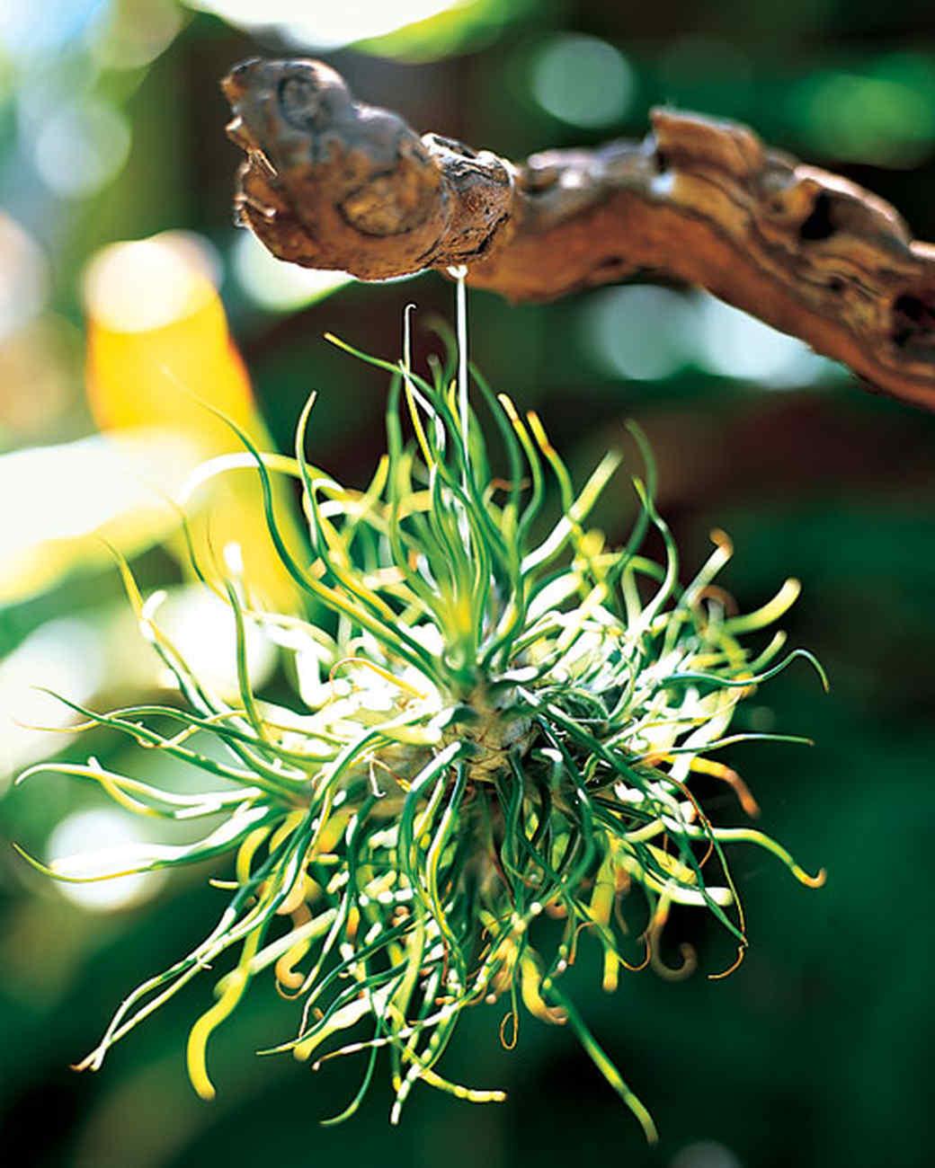 mla10351_sept2008_branchplant1.jpg