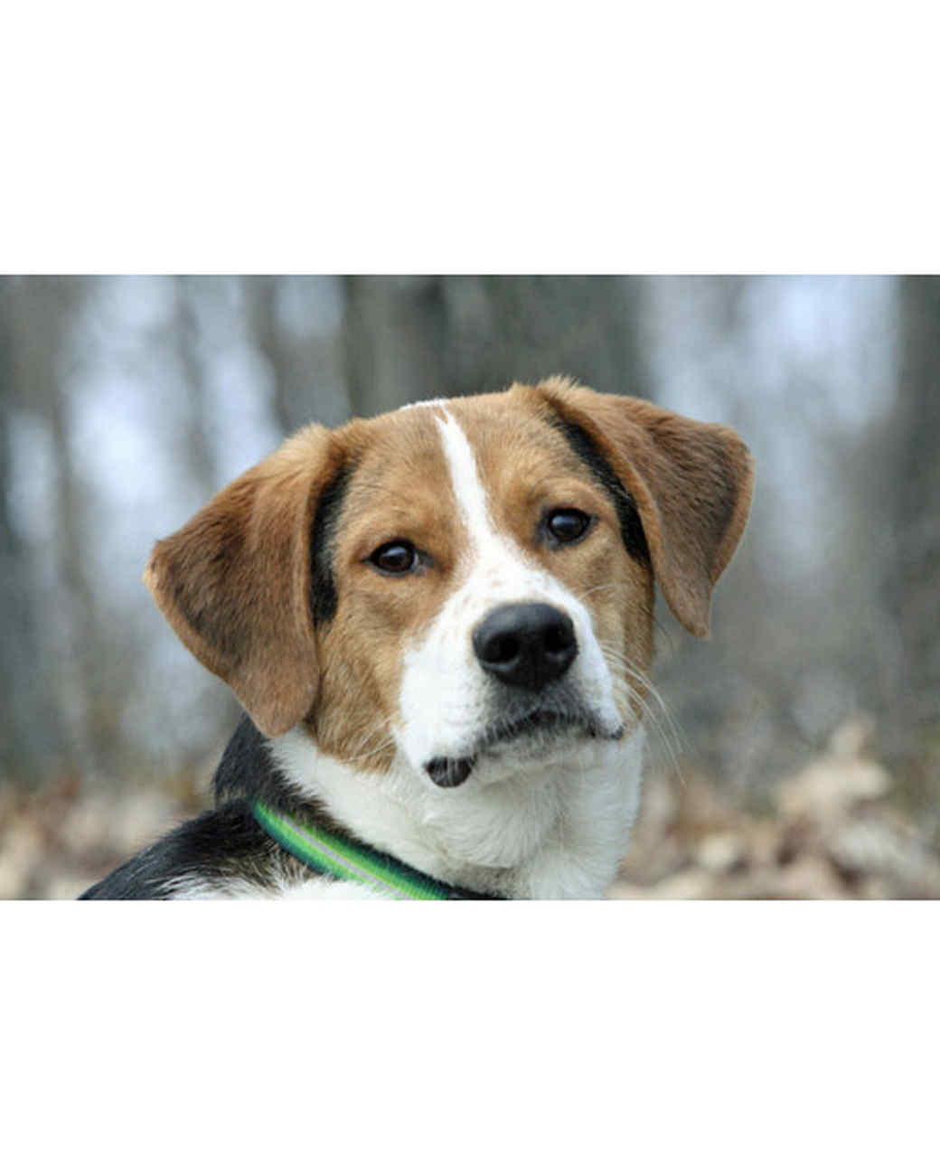 pets_adoption_6508461_16564012.jpg