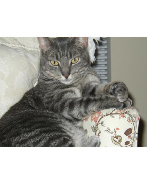 pets_adoption_6702179_16688400.jpg