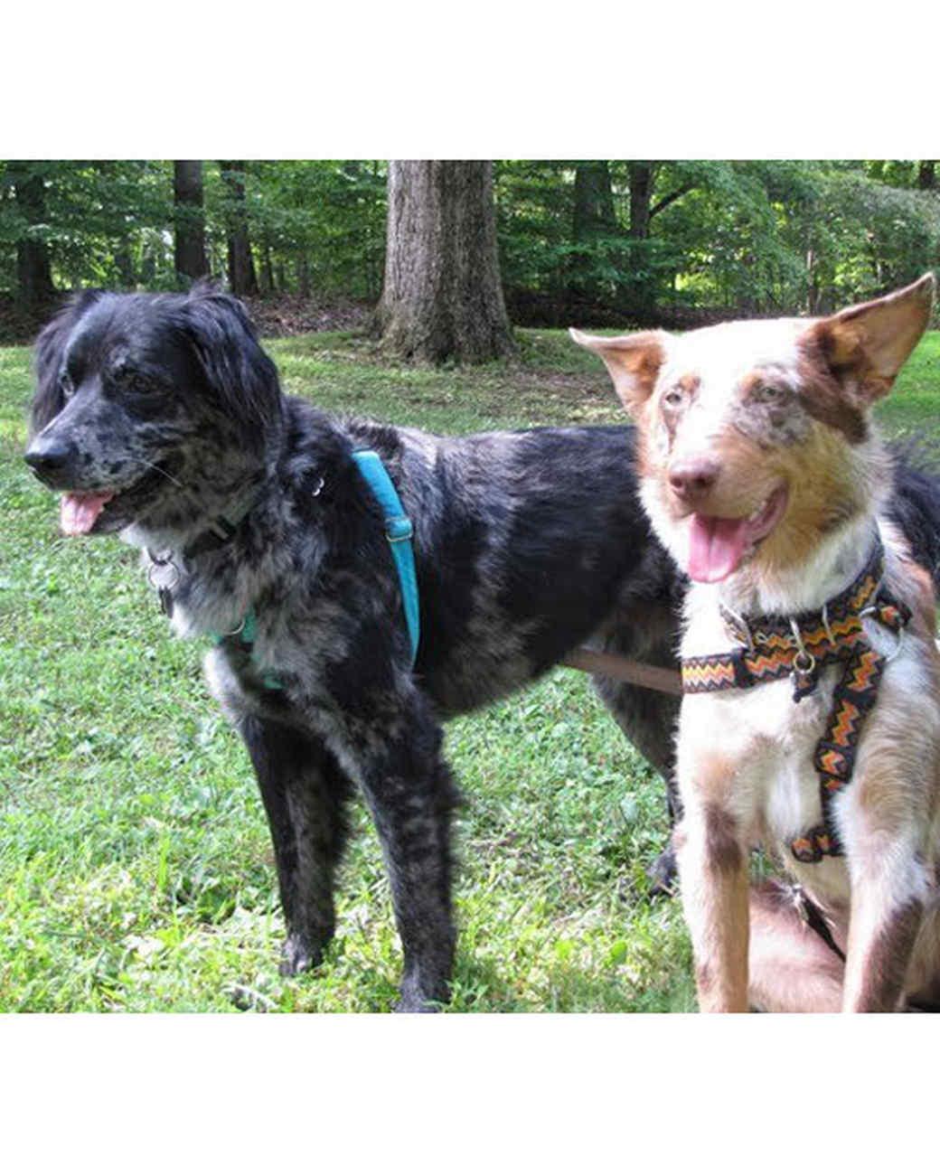 pets_adoption_6718620_18304484.jpg