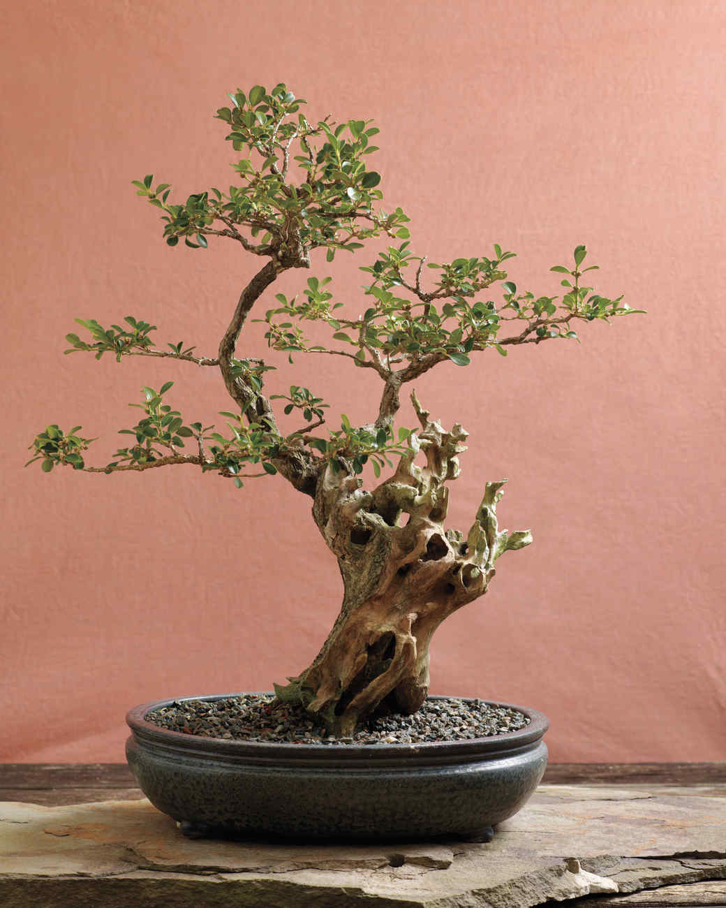 Bonsai trees martha stewart