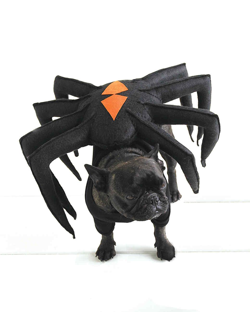 sc 1 st  Martha Stewart & Spider-Dog Pet Costume | Martha Stewart