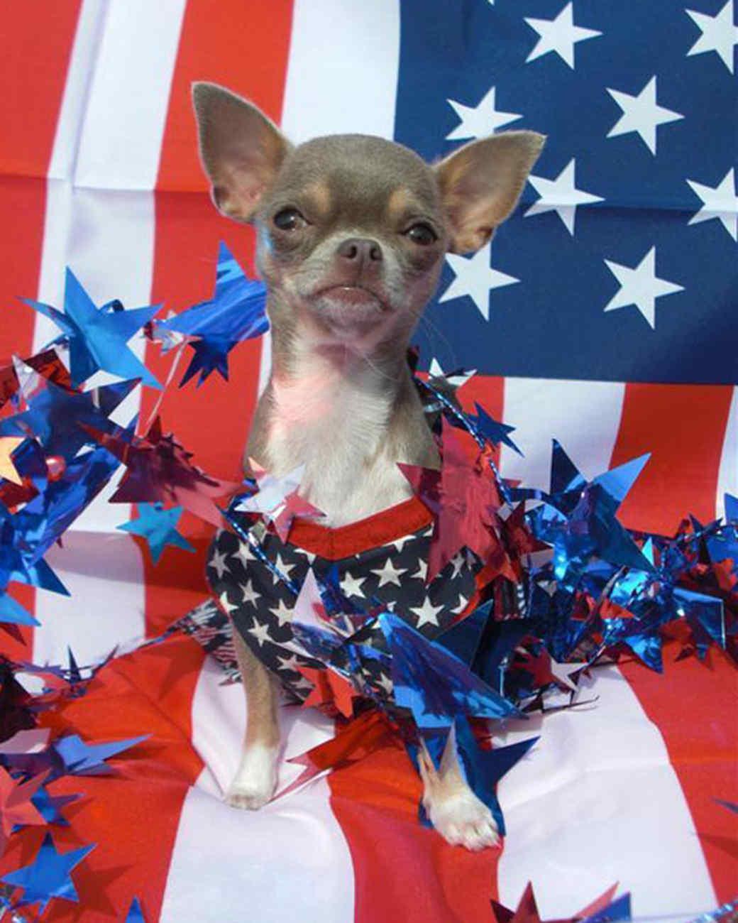 p_patriotic_10_9182932_10802354.jpg