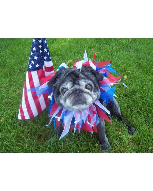 p_patriotic_10_9449523_13516036.jpg