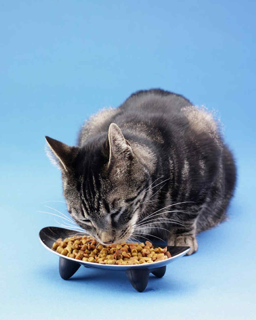 pe_nutrition_bd102029_catbwl_d8.jpg