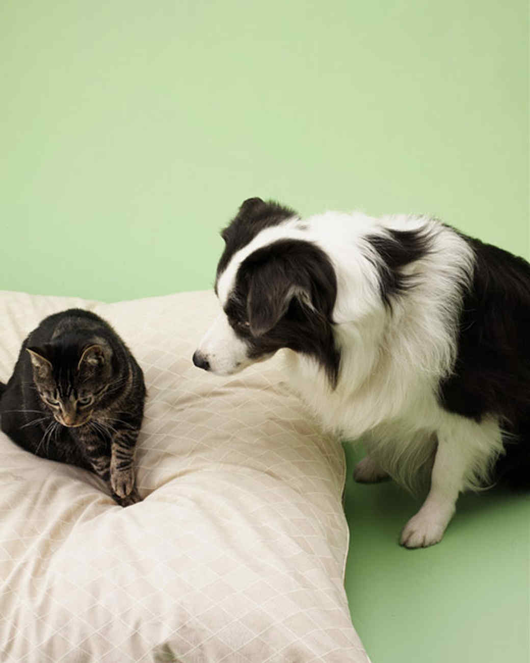 pe_training_bd102029_dogbed_d44.jpg