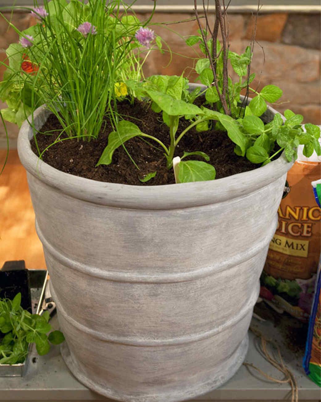 Planting Your Vegetable Garden Video Martha Stewart