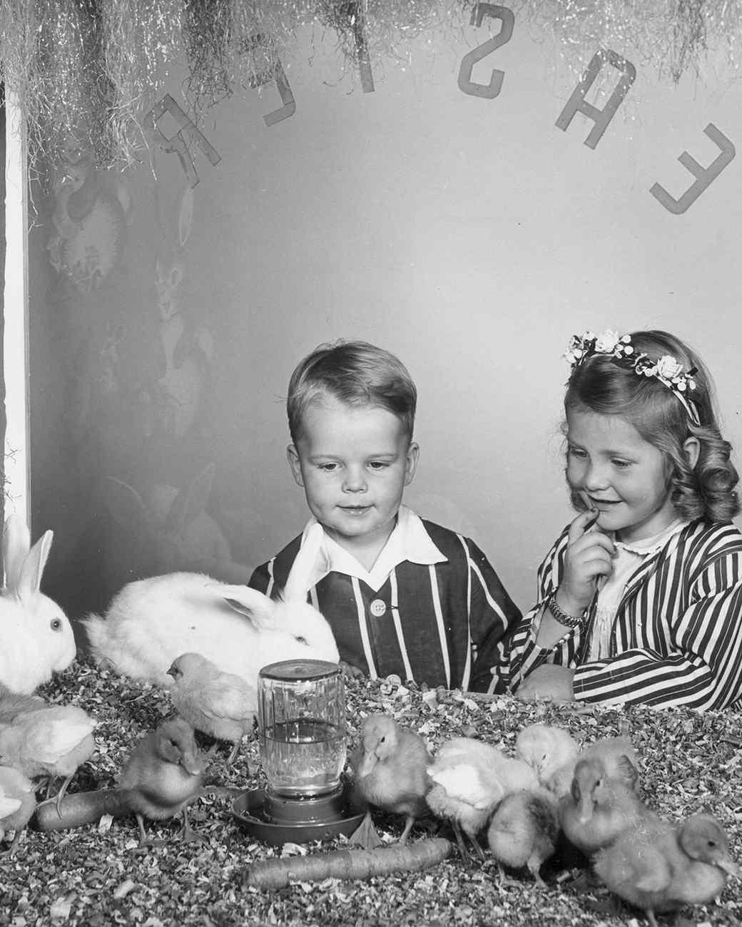young boy and girl looking at baby chicks and rabbits