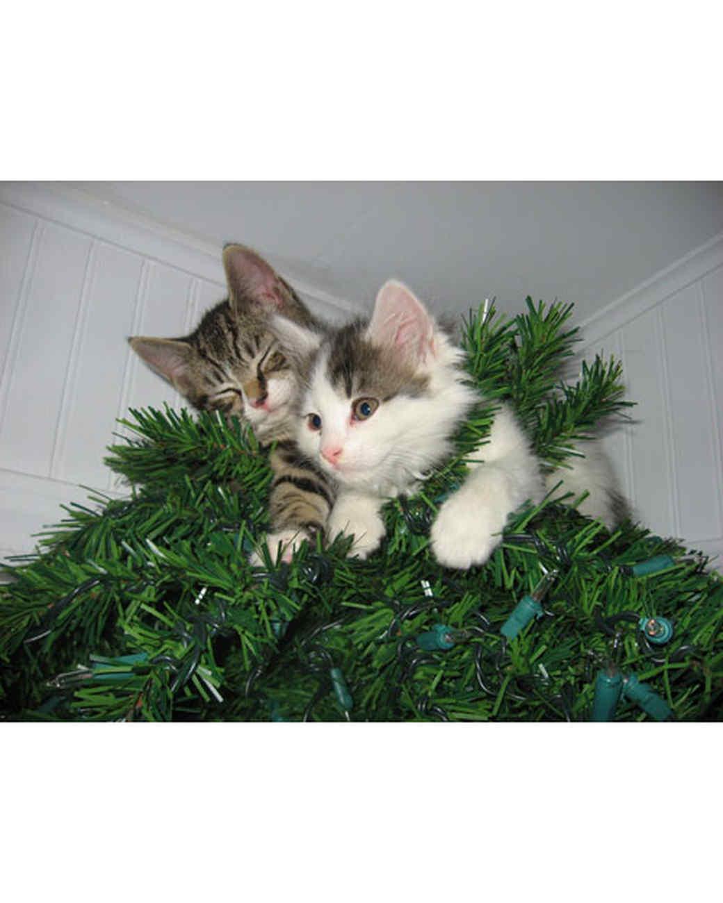 pets_ugc_santa_11602652_27962867.jpg