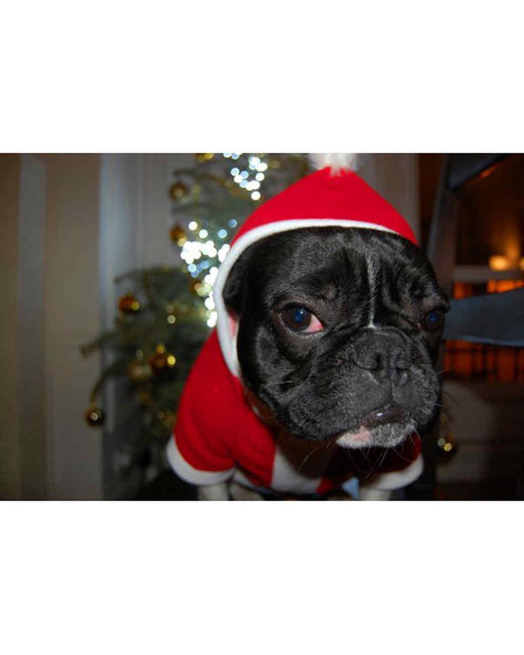 pets_ugc_santa_11628061_11946413.jpg