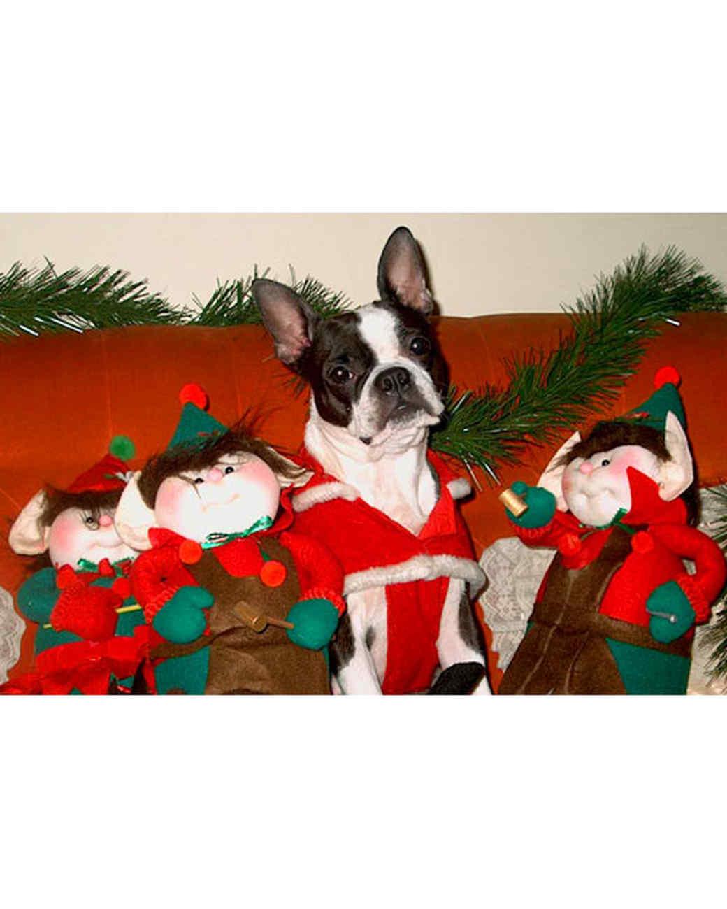 pets_ugc_santa_11710302_11975891.jpg